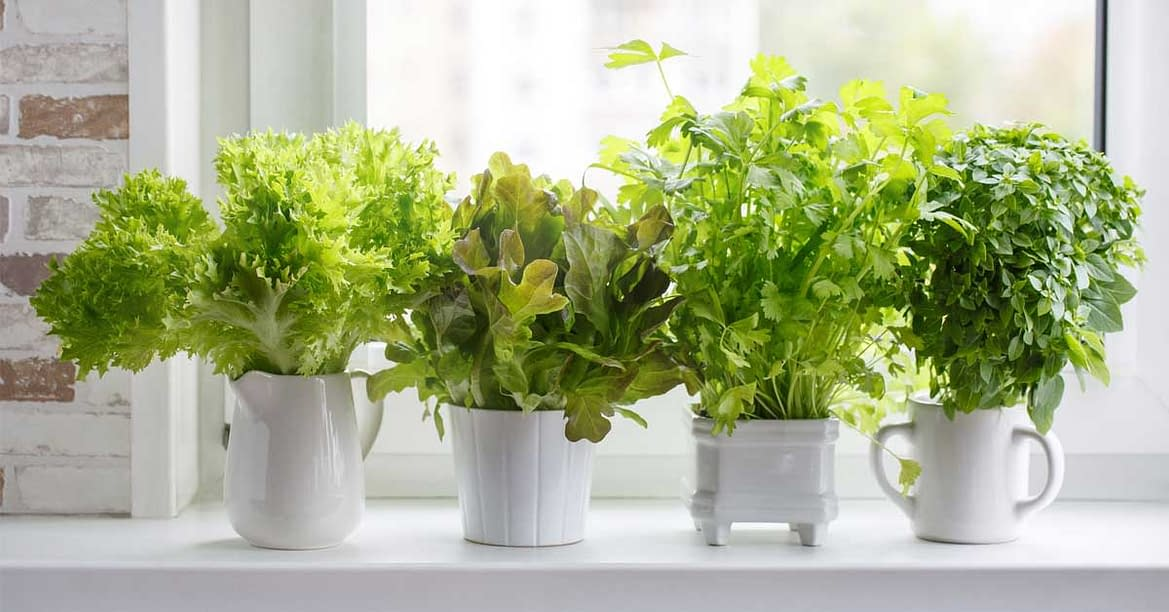 9 Simple Steps To Create A Small Indoor Garden In Your Home